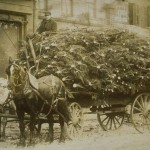 Carro di alberi di Natale, Hartford, ca. 1890 – Connecticut Historical Society and Connecticut History Online