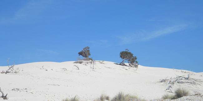 """Avanza a grandi passi il progetto Life """"Soss dunes"""" di Porto Pino"""