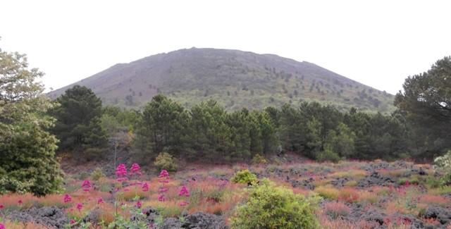 La biodiversità nel parco nazionale del Vesuvio