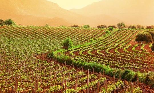 Cantine Aperte 2015, il più importante evento dedicato al turismo del vino in Italia