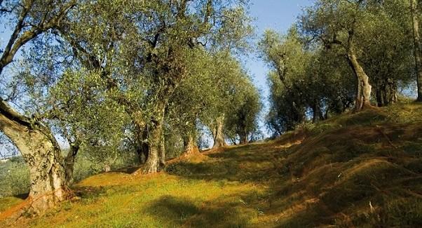 Dieta mediterranea in Sardegna: rispetto del pianeta, maggiore convivialità