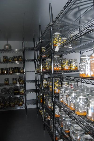 Cella frigorifera -25°C (Copia)