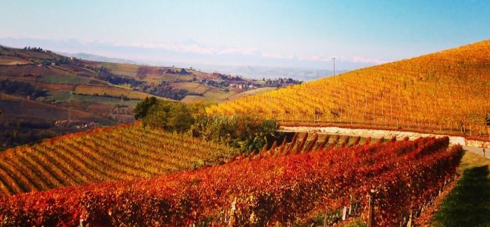 Il vino e l'eredità di un mondo migliore: intervista a Paolo Tuccitto
