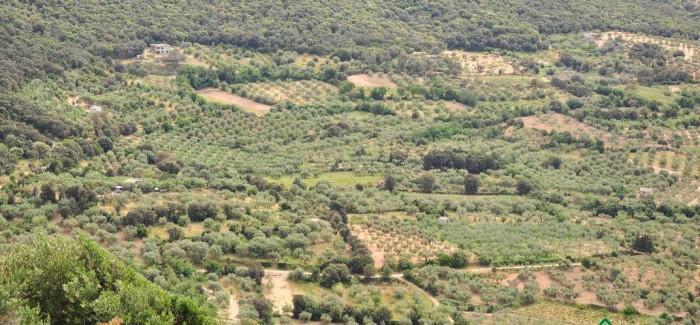 Sardegna, viaggio nel paesaggio della biodiversità
