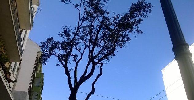Quando non sono gli insetti i nemici degli alberi in citta'