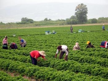 Nuove tematiche nel dibattito alimentare: le colture biologiche e i prodotti transgenici