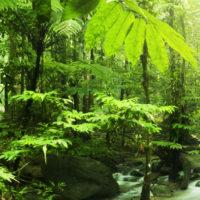 L'etica della natura