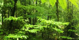 Dna forestale
