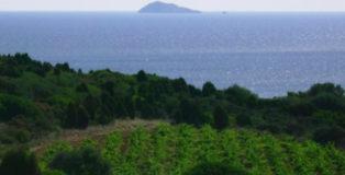 Vigneti e Isola della Vacca