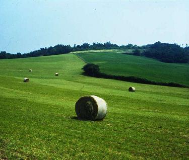 La produzione della località: paesaggi e percorsi del cibo
