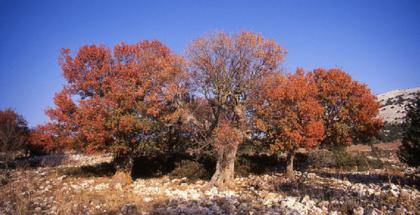 Autunno Sardegna