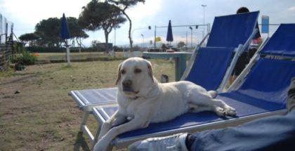 Dog Island, Cagliari