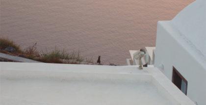 Gatti greci al tramonto