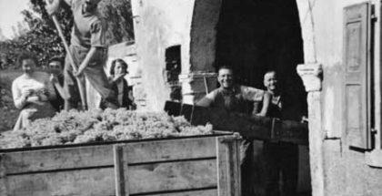 I vendemmiatori siciliani