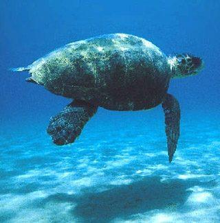 La ricca biodiversità del Mar Mediterraneo