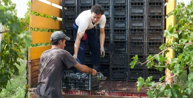 Produzione vino 2016: le previsioni di Coldiretti