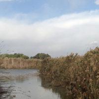 Il benessere passa dal parco di Molentargius: al via i gruppi di cammino