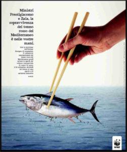 Appello WWF per il tonno rosso