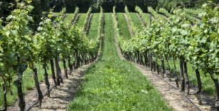 PuntoZero Azienda vinicola