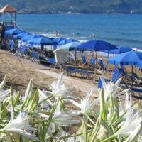 """Castellabate: """"Benvenuti al Sud"""" nella spiaggia del giglio di mare fra dubbi e promesse di riqualificazione"""