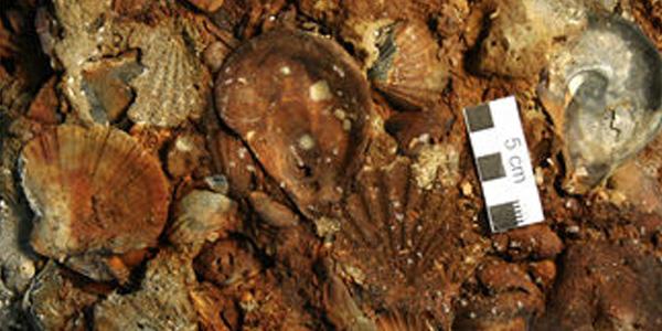Tegnùe: scoperta l'origine dei coralli di Venezia