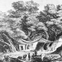 L'archeologo della Natura e la bambina che sognava di vivere nel cavo di un castagno
