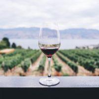 Territorio e vino, come nasce una Denominazione