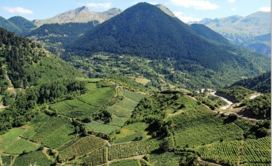In giro per il Mediterraneo a degustare vini medagliati del CMB