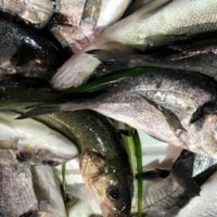 Il lavoro senza fine dei pescatori-sperimentatori. Intervista a Nicola Cocco
