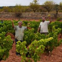 """Scadenza iscrizione al Concorso internazionale di vini """"Grenaches du Monde 2018"""""""