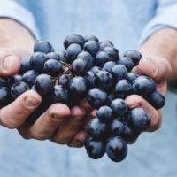 Grenache e cannonau: sono davvero sinonimo di una stessa varietà?