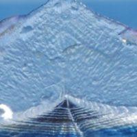 Al via l'operazione Delphis 2018,  per proteggere le balene e i delfini nel Mediterraneo