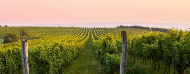 Turismo del vino in Italia