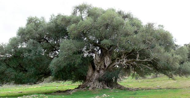 Quattro nuovi prodotti turistico – esperienziali nelle aree rurali della Sardegna nati dal progetto Prometea