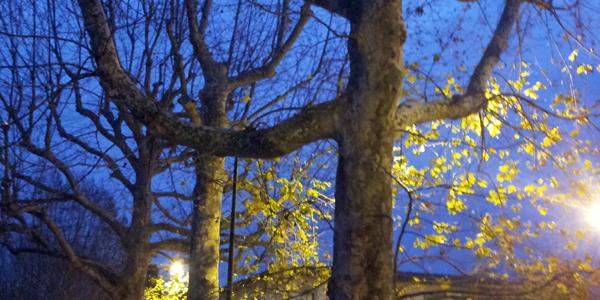 Con la luce accesa neanche gli alberi dormono