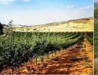 La Copagri Sardegna organizza il seminario informativo pubblico dedicato ai temi: terre pubbliche, filiere produttive, opportunità Gal, accesso al credito e vantaggi del contoterzismo