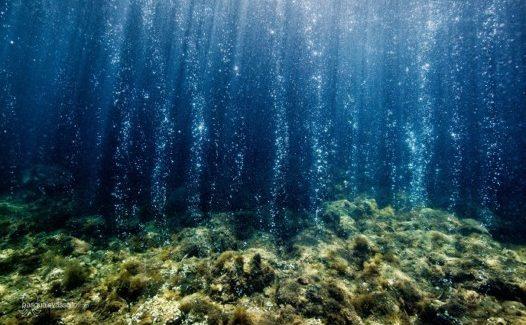 Acidificazione degli Oceani: si studiano gli effetti dei cambiamenti ambientali negli habitat marini