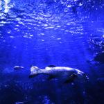 Con Sushi Drop la mappa  della biodiversità del Mar Adriatico