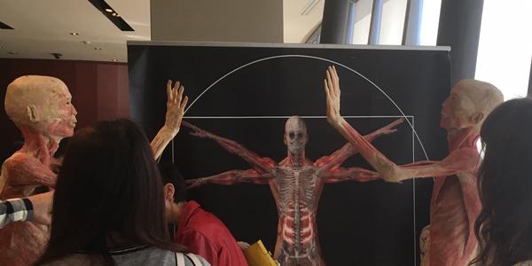 Bodies the exhibition: cadaveri in mostra