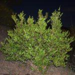 Gli italiani riscoprono le piante officinali