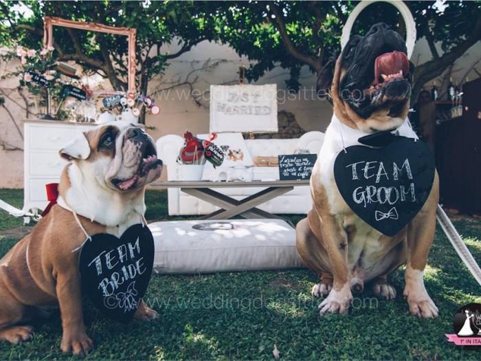 cani ad un matrimonio