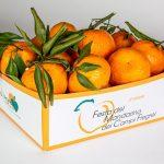 Grande fermento per il Mandarino Flegreo al Convegno sull'Agricoltura Sostenibile