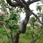Dal Farm to Fork alla Biodiversità Gli obiettivi ambiziosi della Commissione Ue