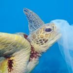 Apertura del Festival Giornalisti del Mediterraneo nel segno della tutela ambientale